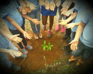 II Dia Mundial da Floresta