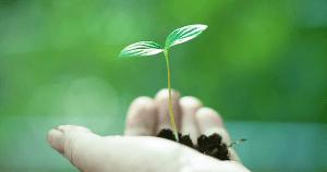 Os impactos da gestão ambiental para a sociedade