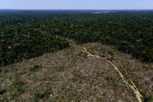 Qual a situação do desmatamento no Brasil
