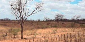Como é feita a recuperação de áreas degradadas?